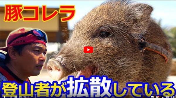 豚コレラ問題